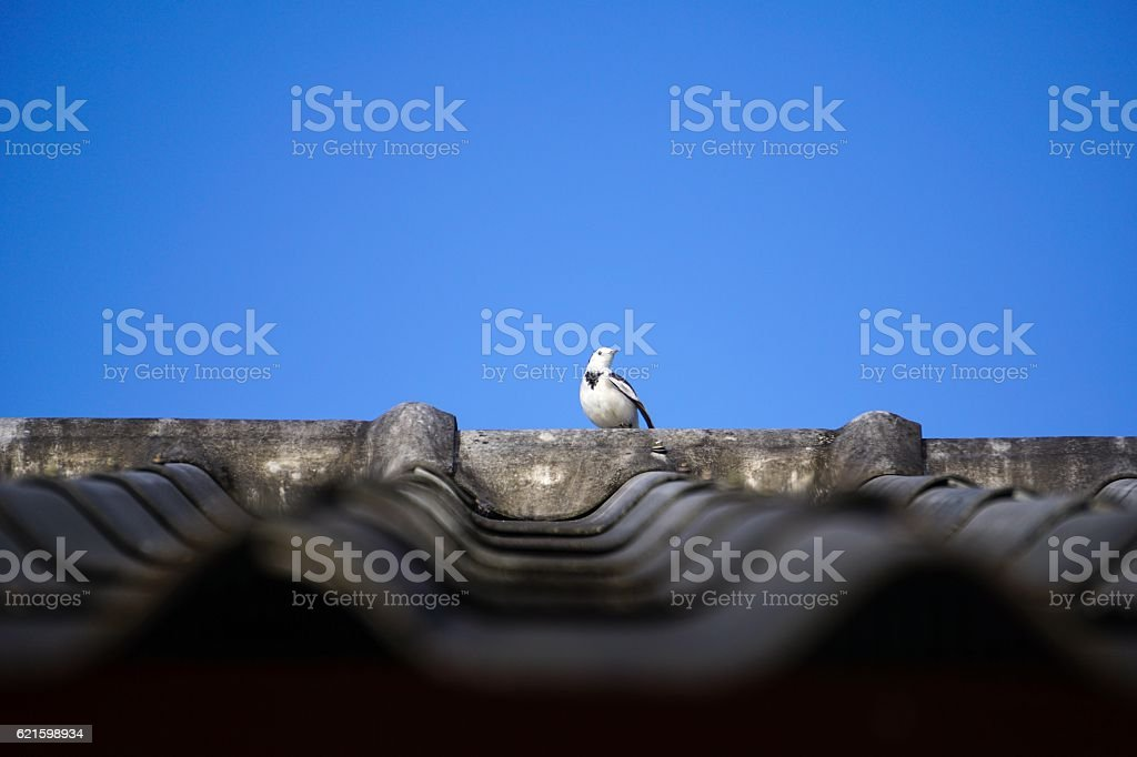 Small bird on the roof royalty-free stock photo