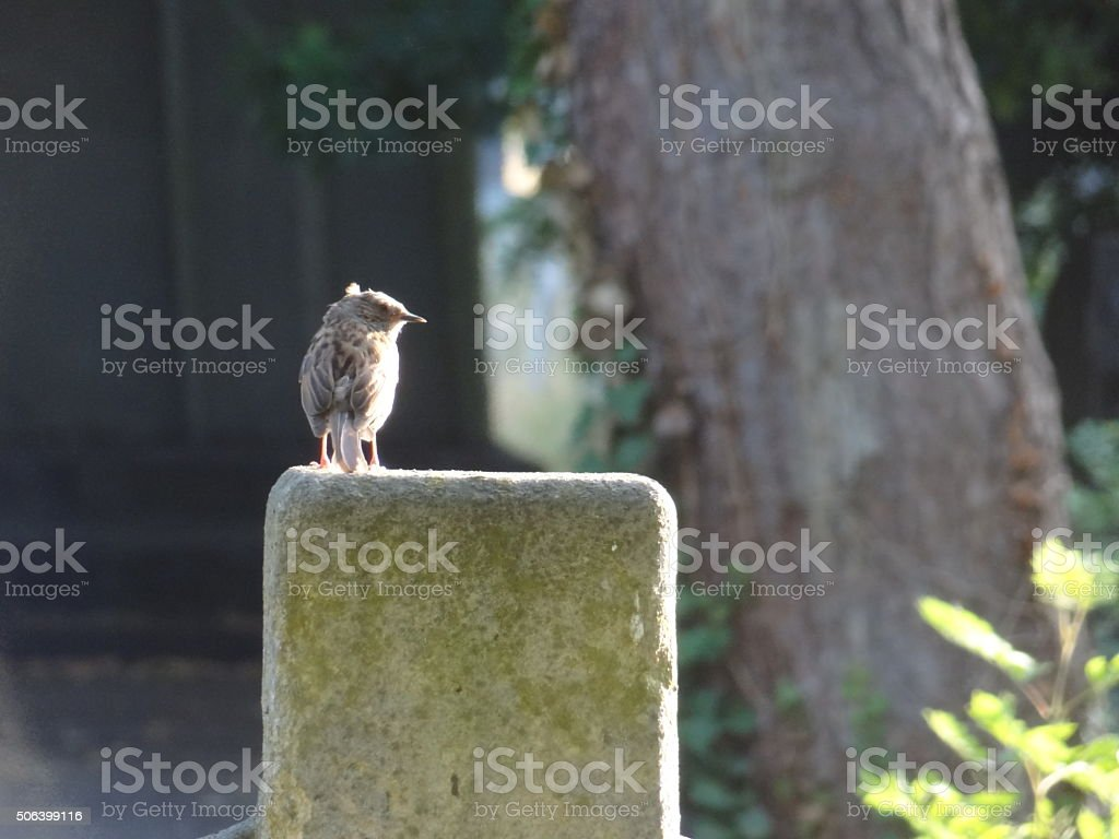 Small bird perched on a headstone stock photo