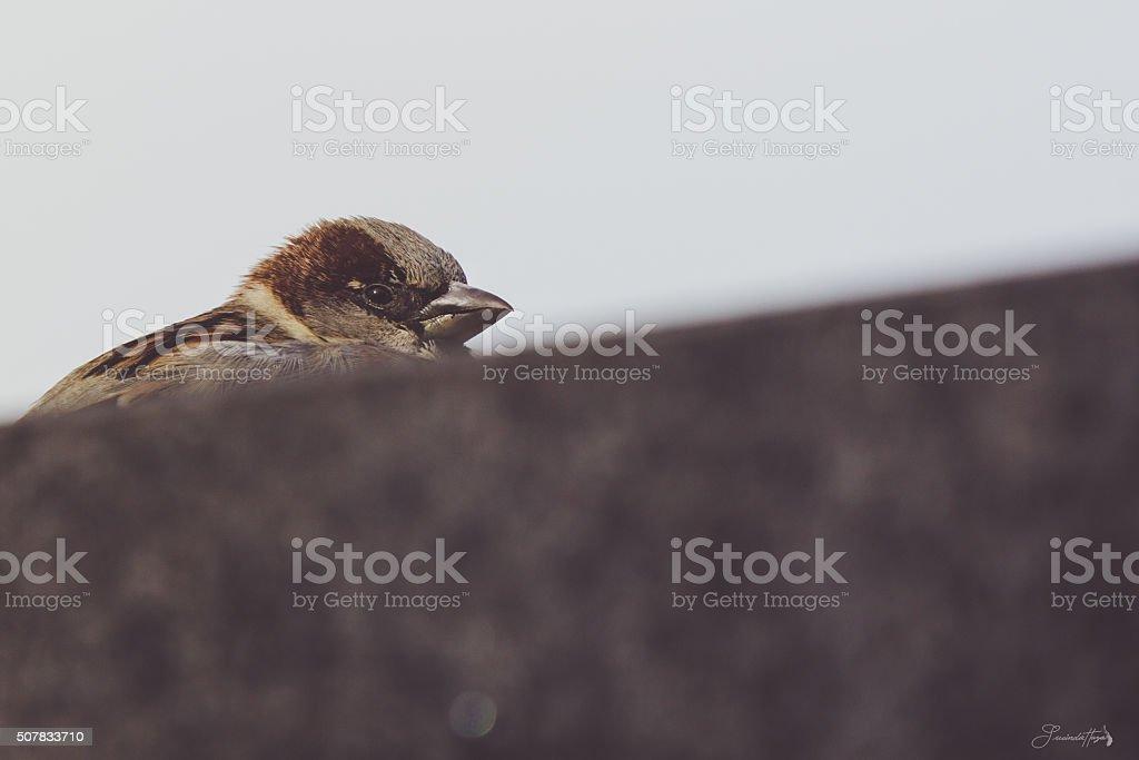 Small Bird stock photo