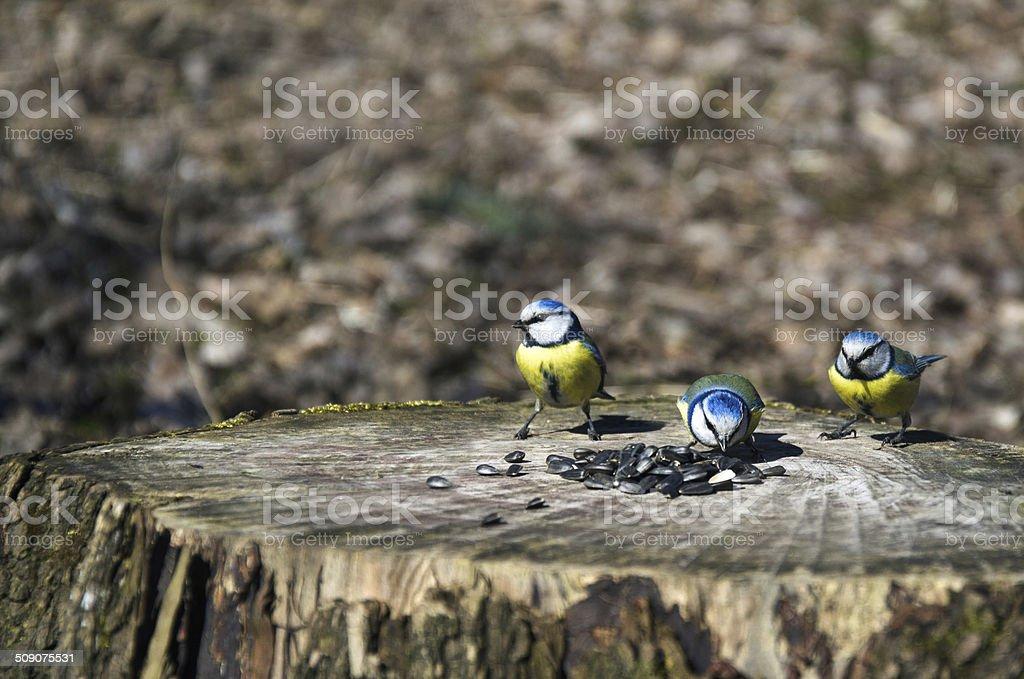 Pequenas aves foto de stock royalty-free
