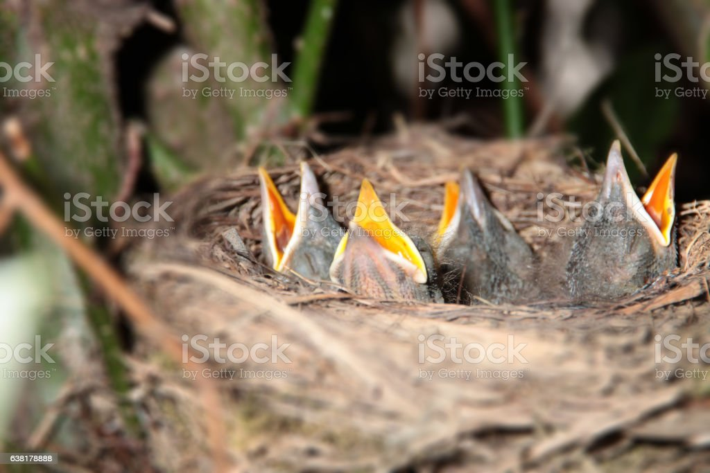 Small birds waiting for food stock photo