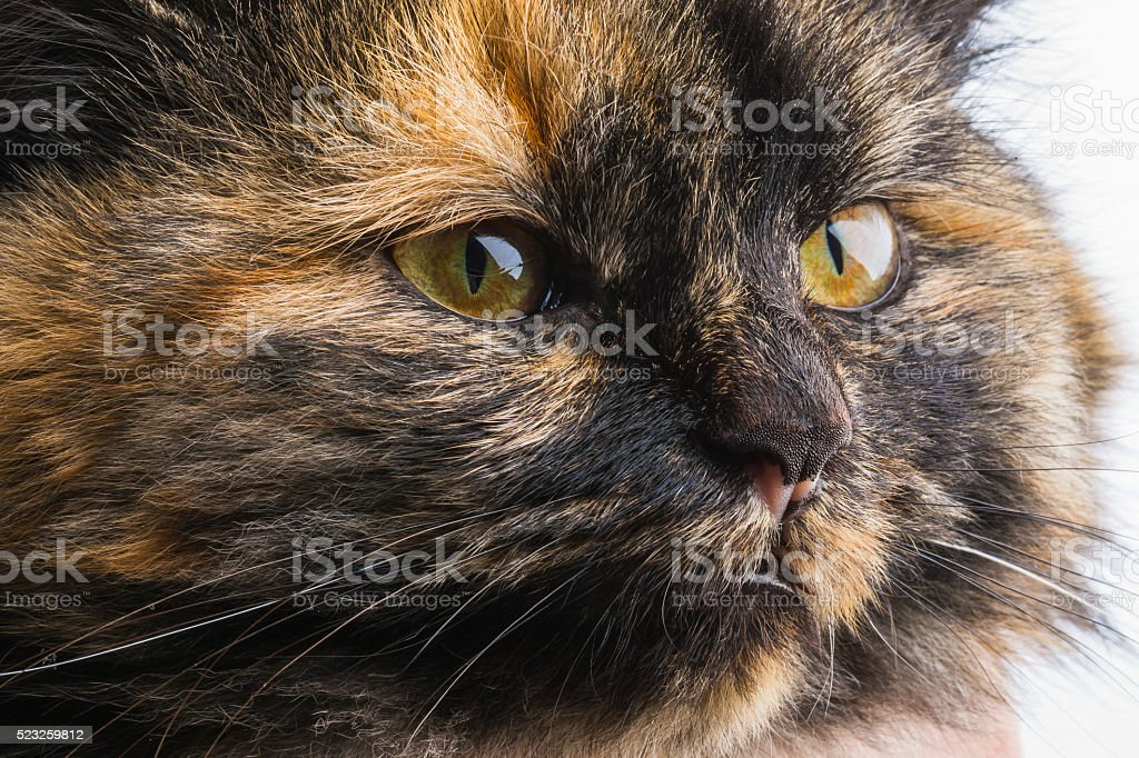 small black cat playing with himself stock photo