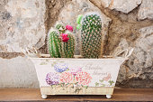 Small blooming cactus