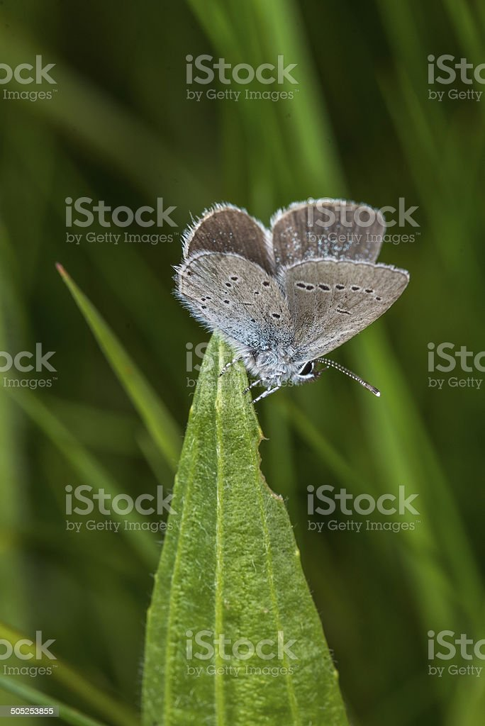 Small Blue butterfly royalty-free stock photo