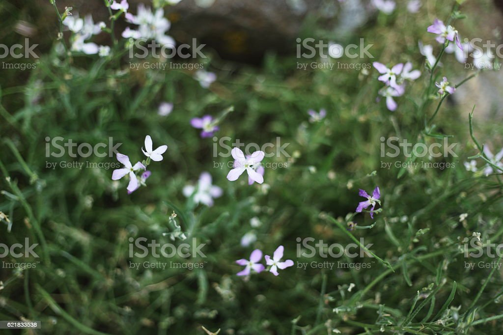 small blue flowers royalty-free stock photo