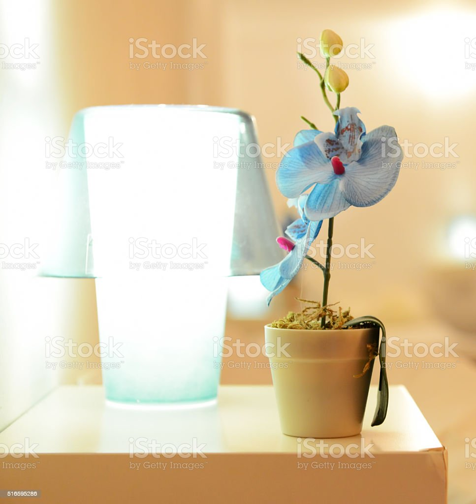 Small blue orchid flower in the pot on the table stock photo