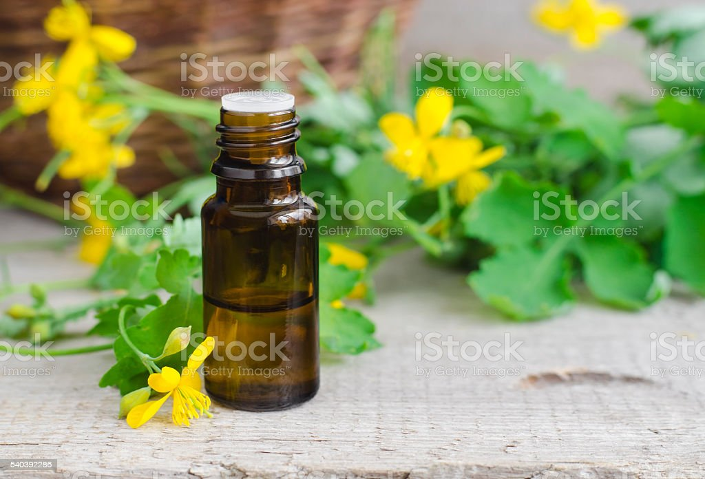 Small bottle of celandine infusion (herbal tincture, oil) stock photo