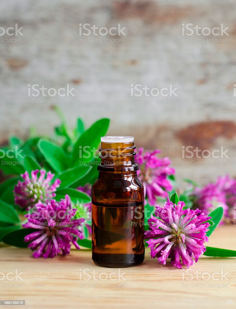 Small bottle of red clover extract (tincture, infusion, oil) stock photo