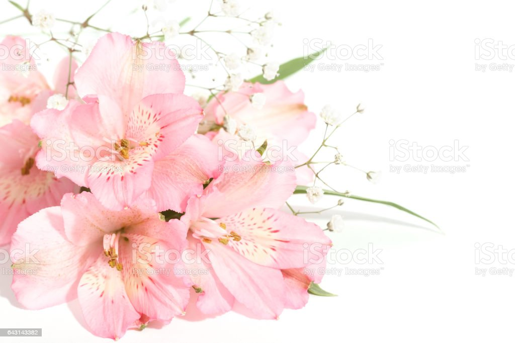 small bouquet of alstroemeria with gypsophila on a white background stock photo