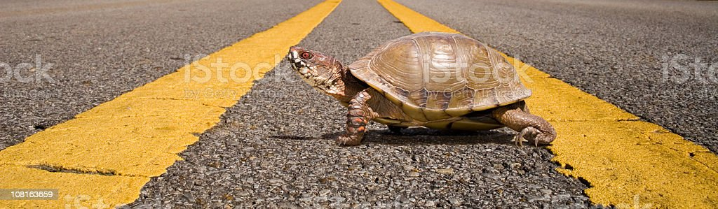 Small Box Turtle Walking Across Road stock photo