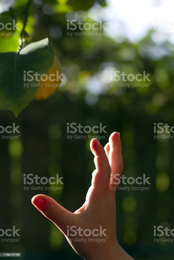 small boys hand stock photo