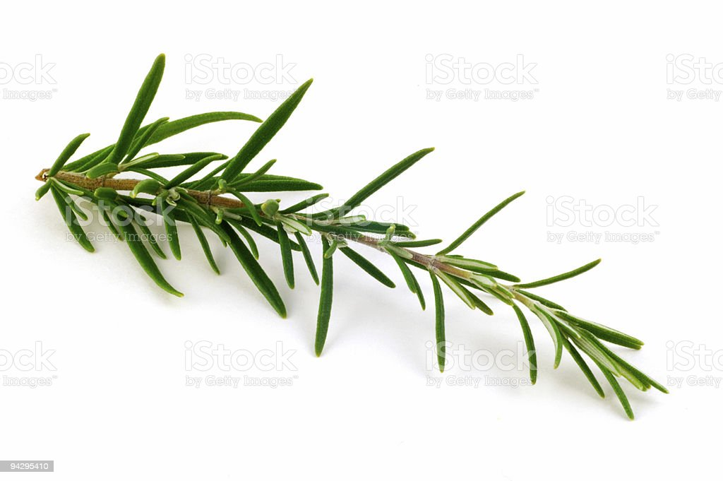 Small branch of Rosemary isolated on white background royalty-free stock photo