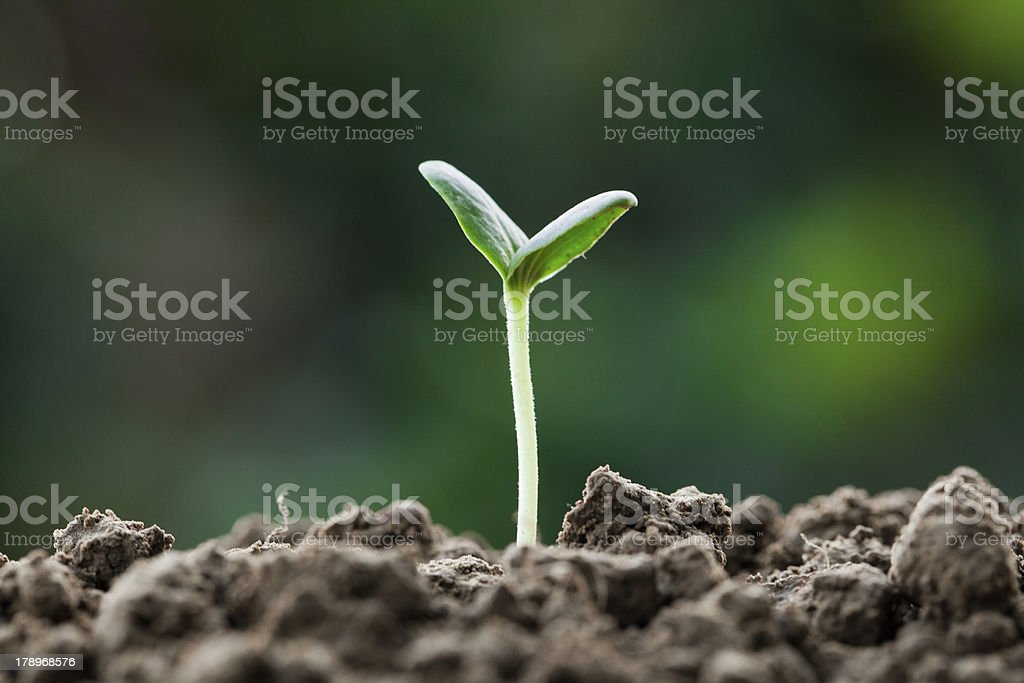 small bud growing royalty-free stock photo