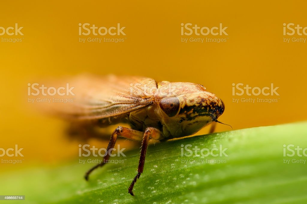 Small bug on a leaf stock photo