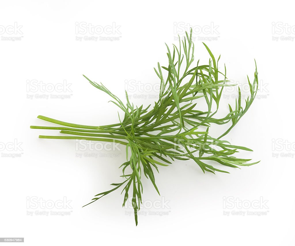 Small bundle of dill sprigs stock photo