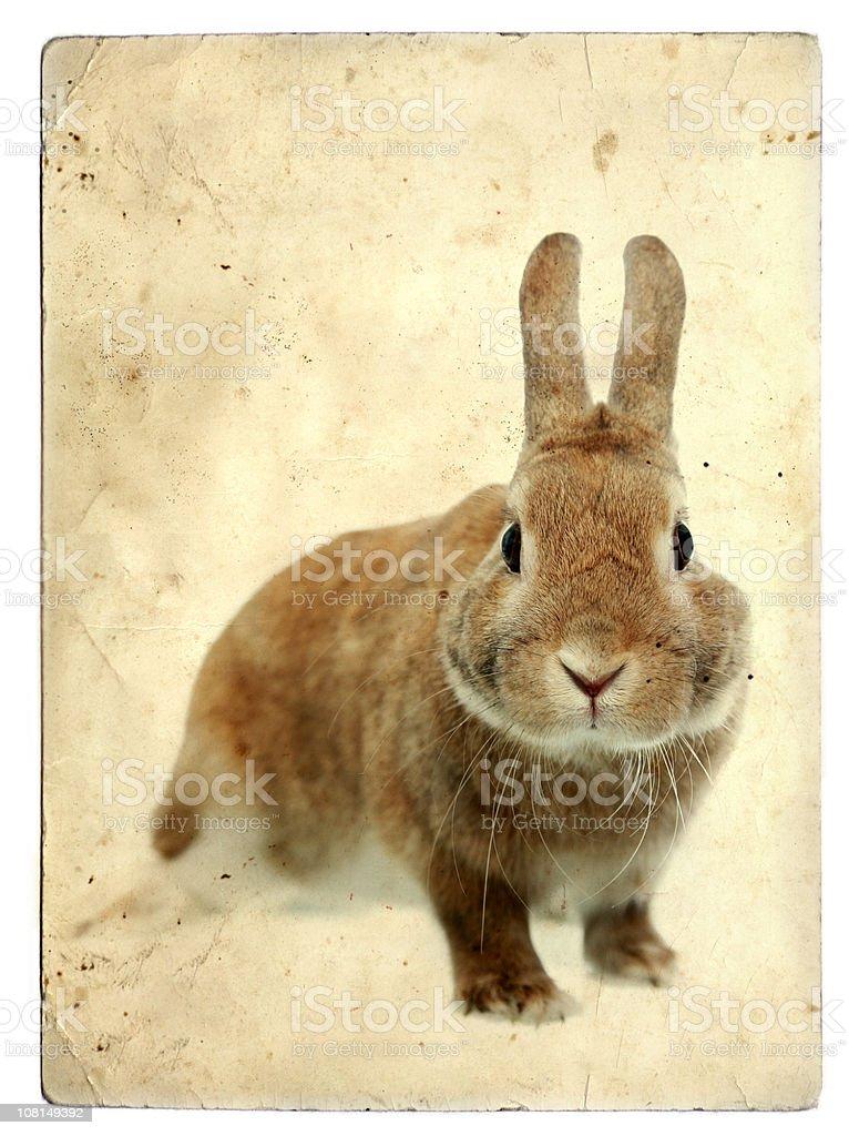 Small Bunny Rabbit on Vintage Background stock photo