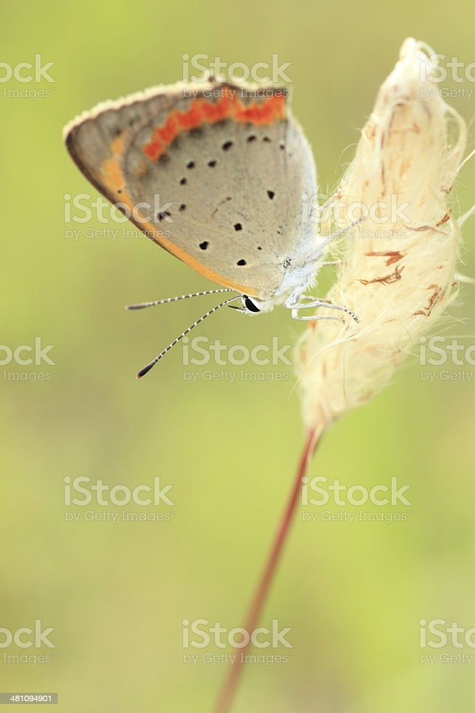 Small butterfly on yellow flower. royalty-free stock photo