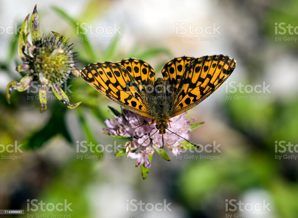 Small butterfly stock photo