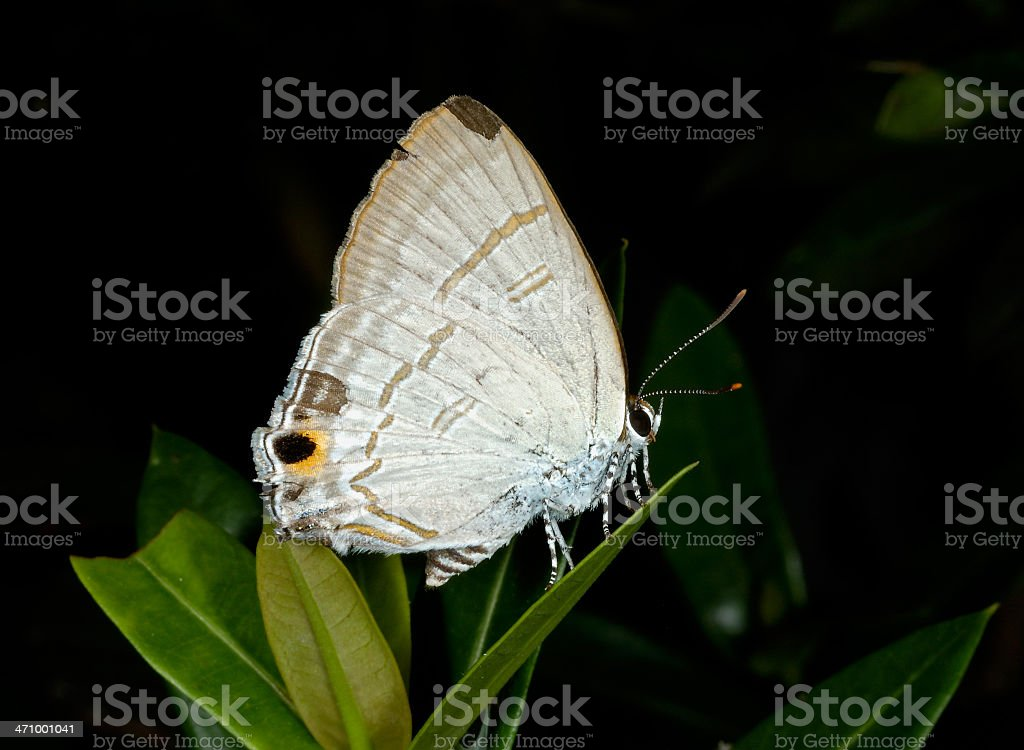Small Butterfly royalty-free stock photo