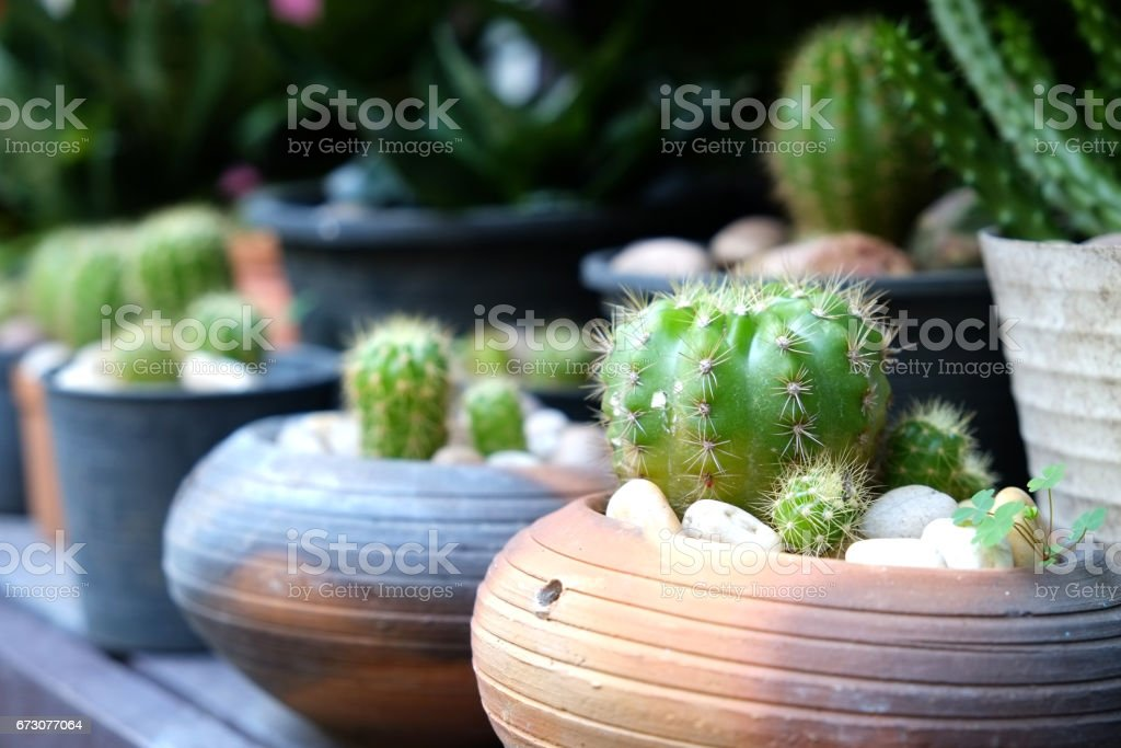 Small cactus in clay pot stock photo