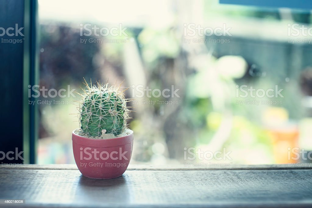 Small cactus on shelf counter royalty-free stock photo