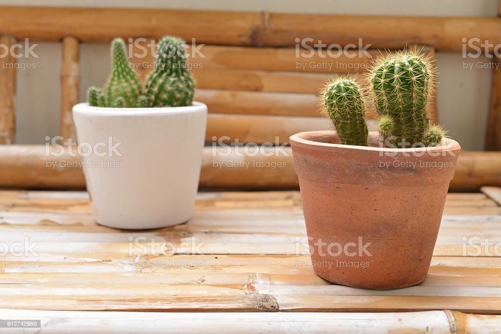 Small cactus planted in pots on the terrace.cactus stock photo