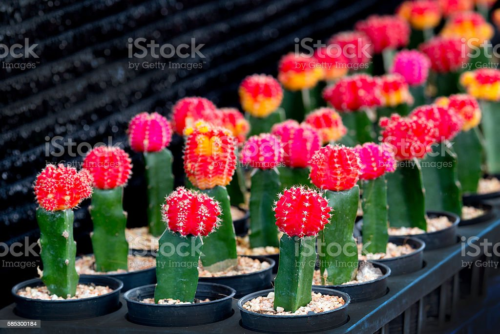small cactus pot corner garden in home decoration. stock photo