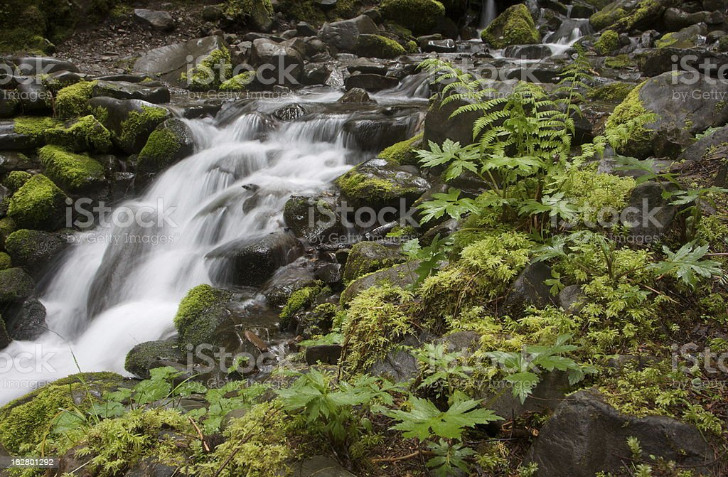 Small Cascade in the Lush Forest of Olympic National  Park royalty-free stock photo