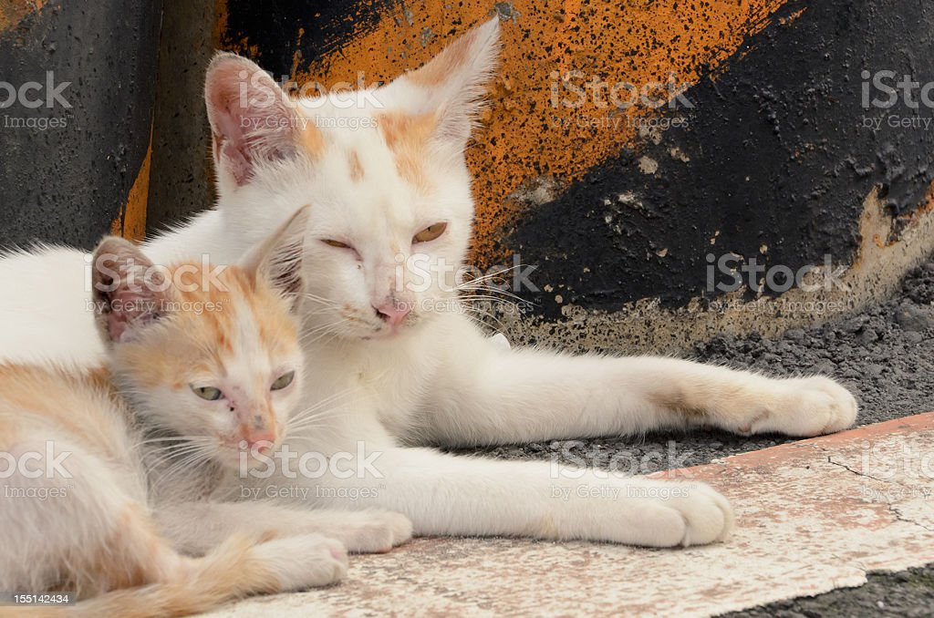 Small cat and her mother royalty-free stock photo