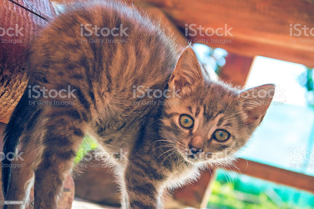 Small Cat In The Garden On Sunny Day stock photo