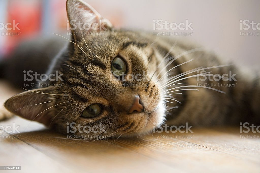 Small cat royalty-free stock photo