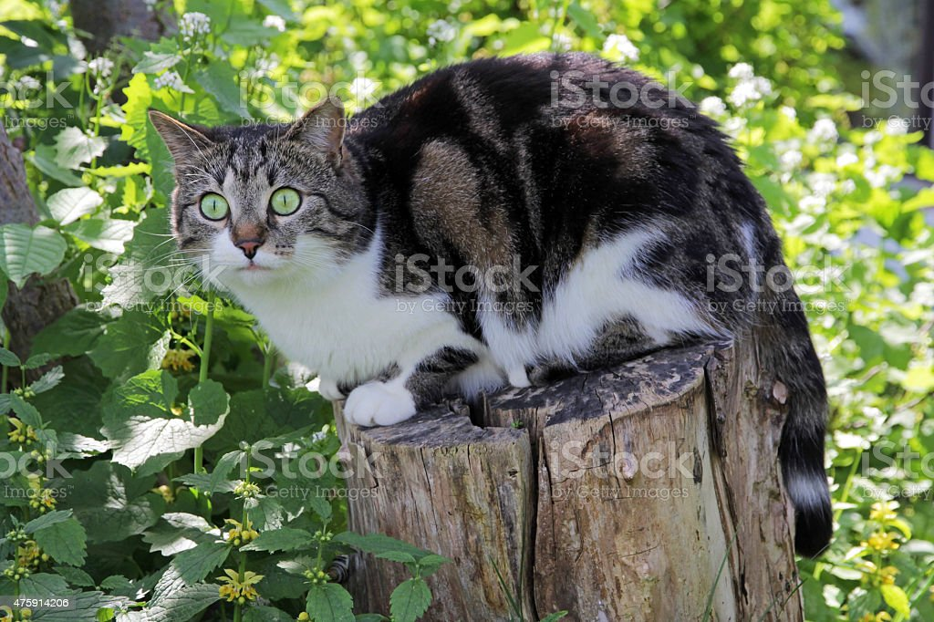 small cat sitting curious on a tree trunk stock photo