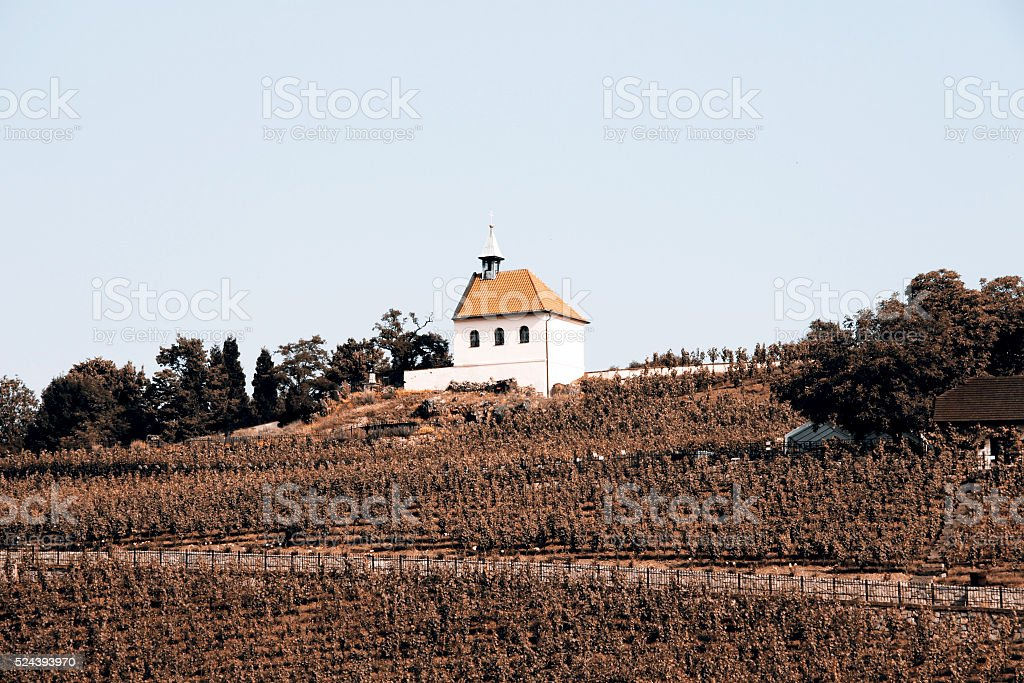 Small chapel and vineyard stock photo