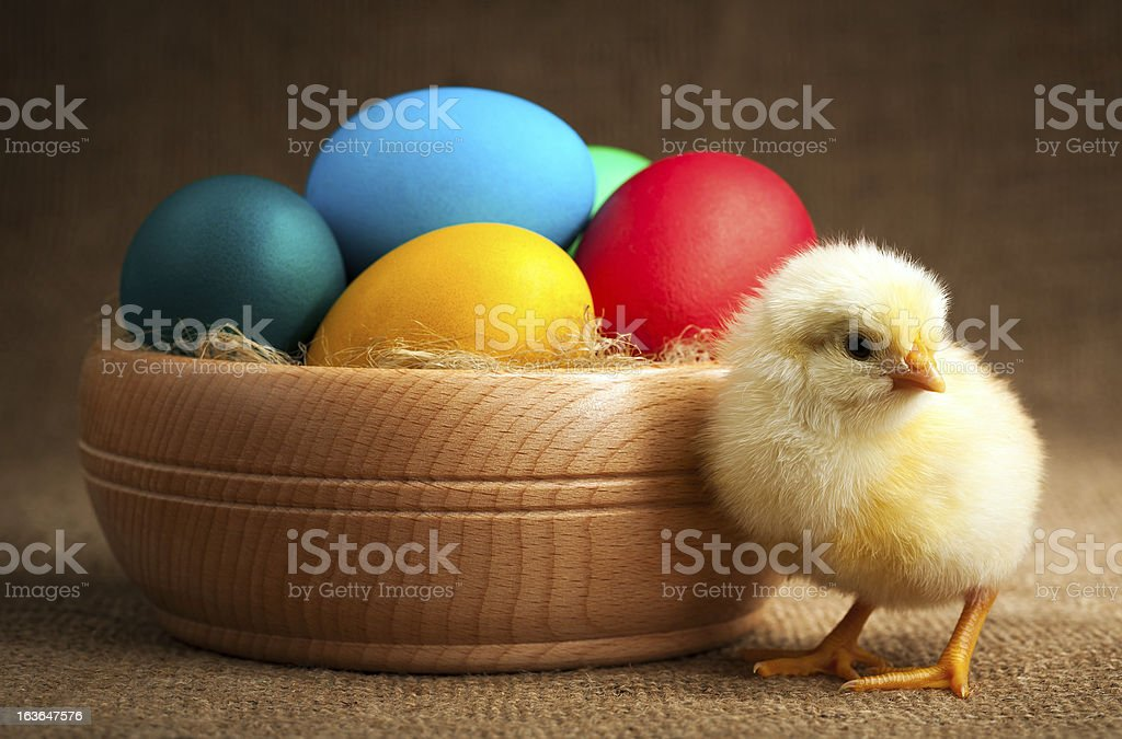 small chick with easter eggs. isolated royalty-free stock photo