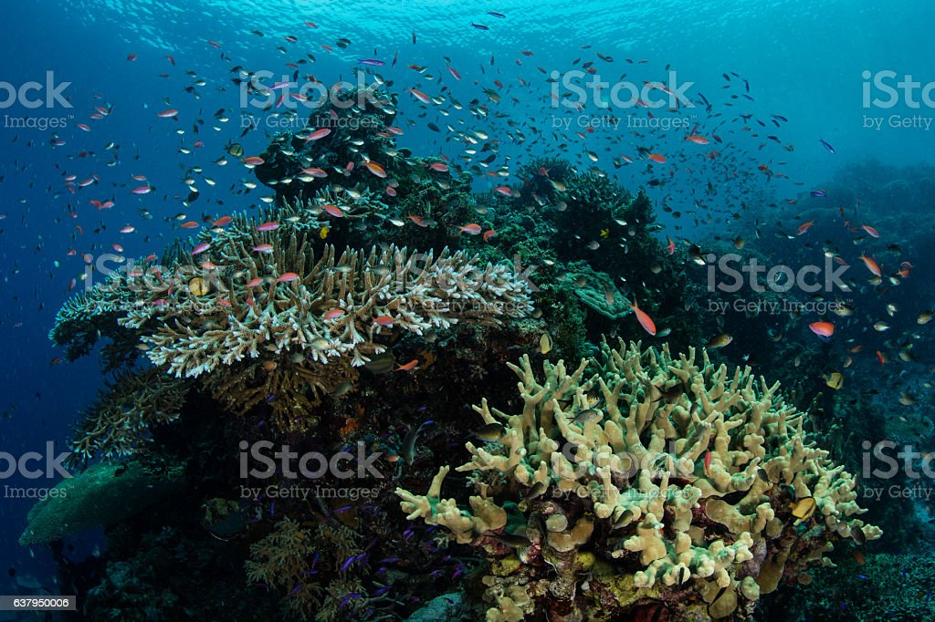 Small, Colorful Fish and Coral Reef stock photo