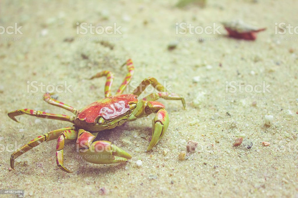 Small crab on a beach stock photo