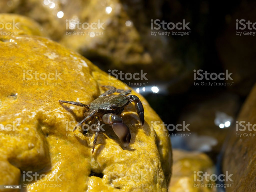 Small crab on a stone stock photo