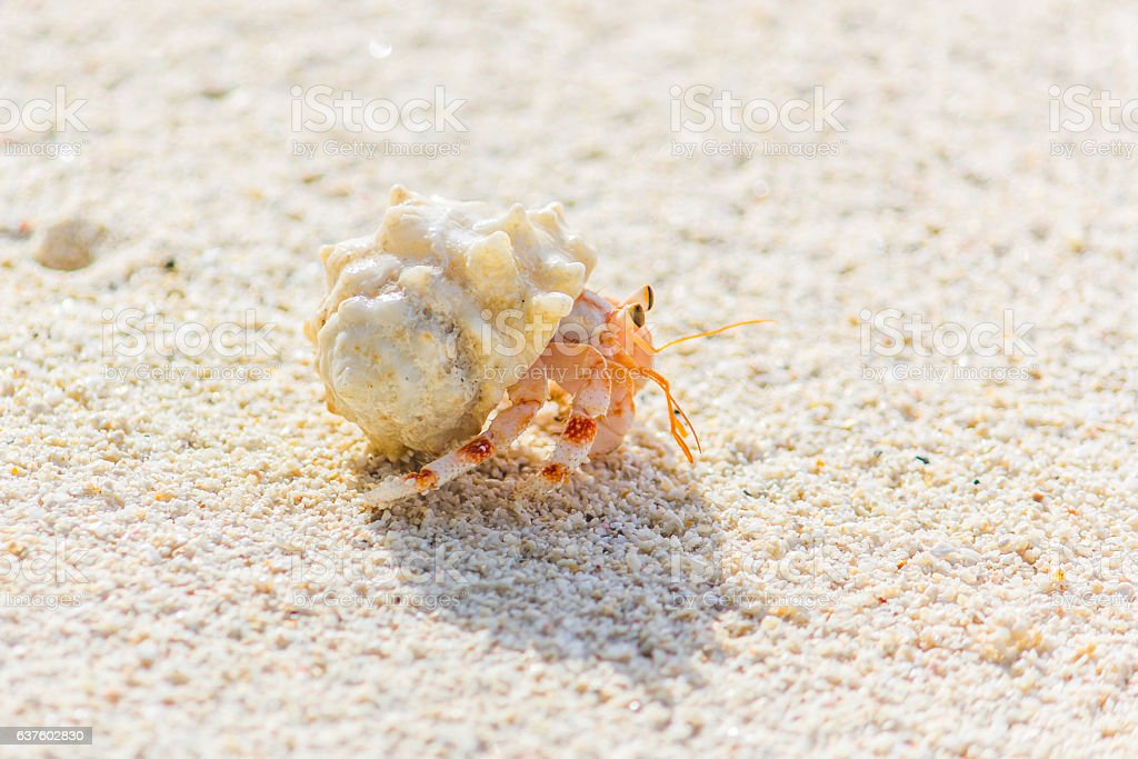Small Crab on the Beach stock photo