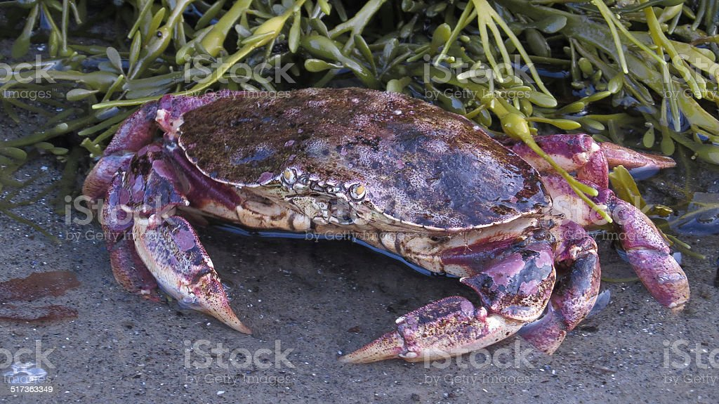 Petit crabe stock photo