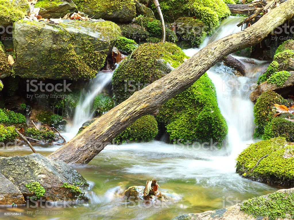 Small creek in forest stock photo