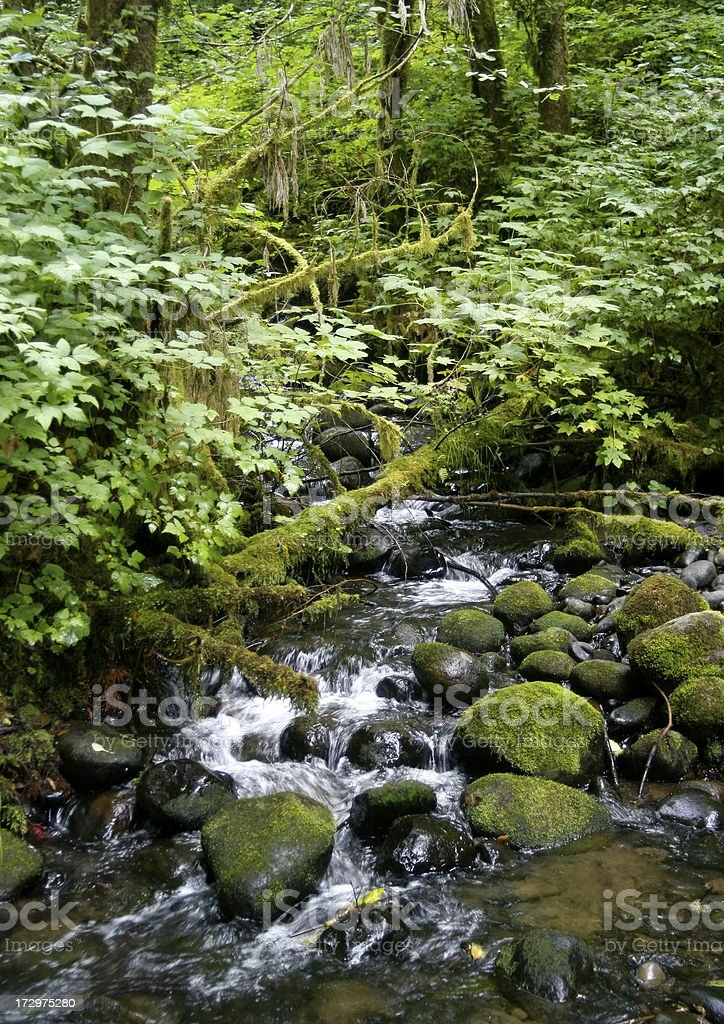 Small Creek In Lush Forest royalty-free stock photo