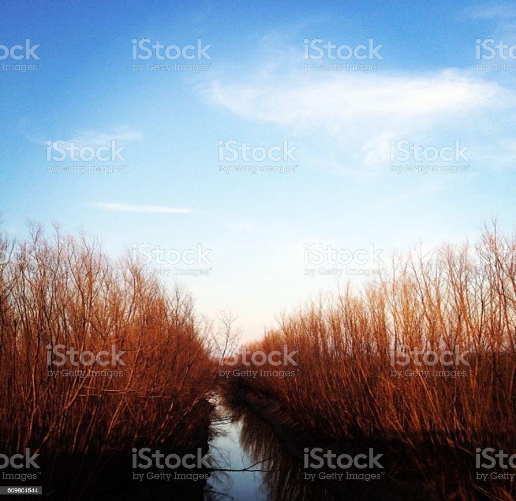 Small creek stock photo