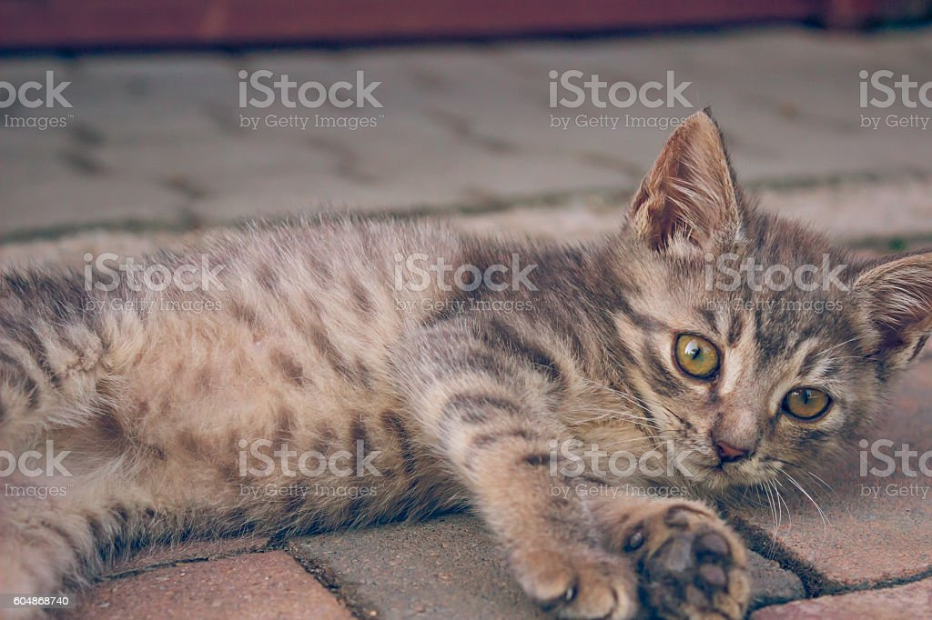 Small Cute Cat Playing On The Ground stock photo