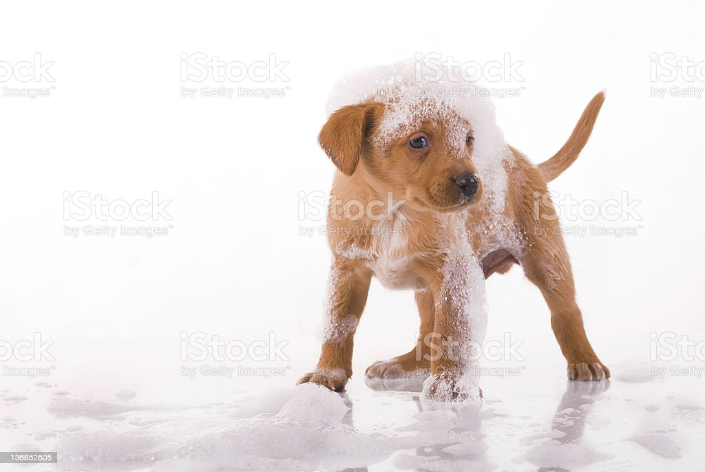 small, cute, dog stock photo