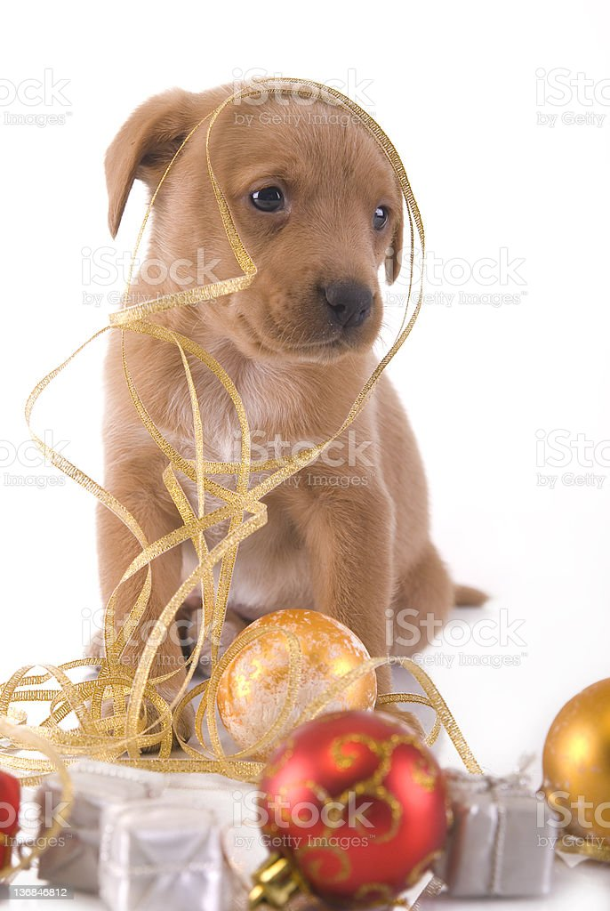 small cute puppy stock photo