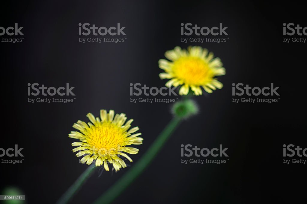Small cute yellow flower stock photo