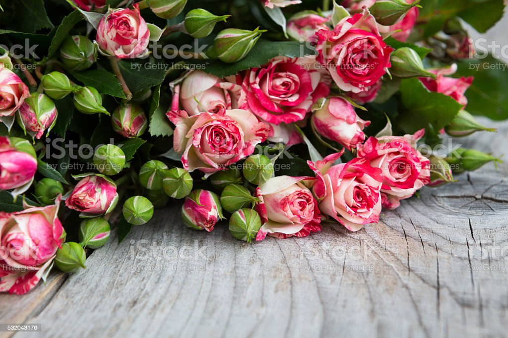 Small cutted roses stock photo
