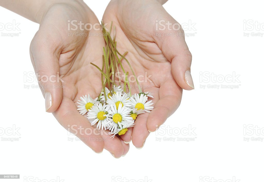 small daisy royalty-free stock photo