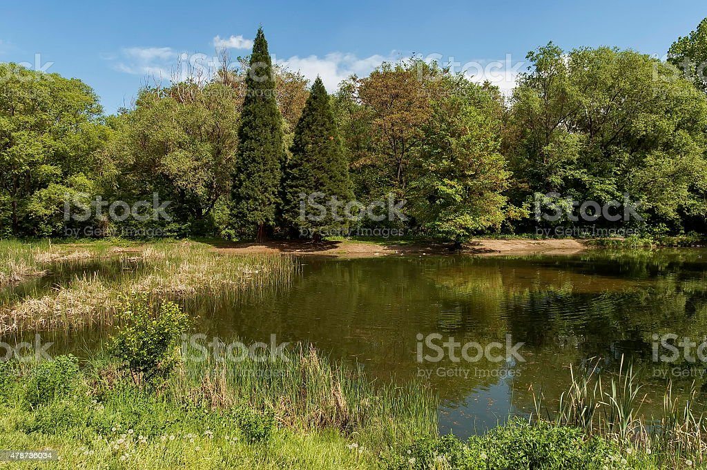 Small dam in the beautiful South park stock photo