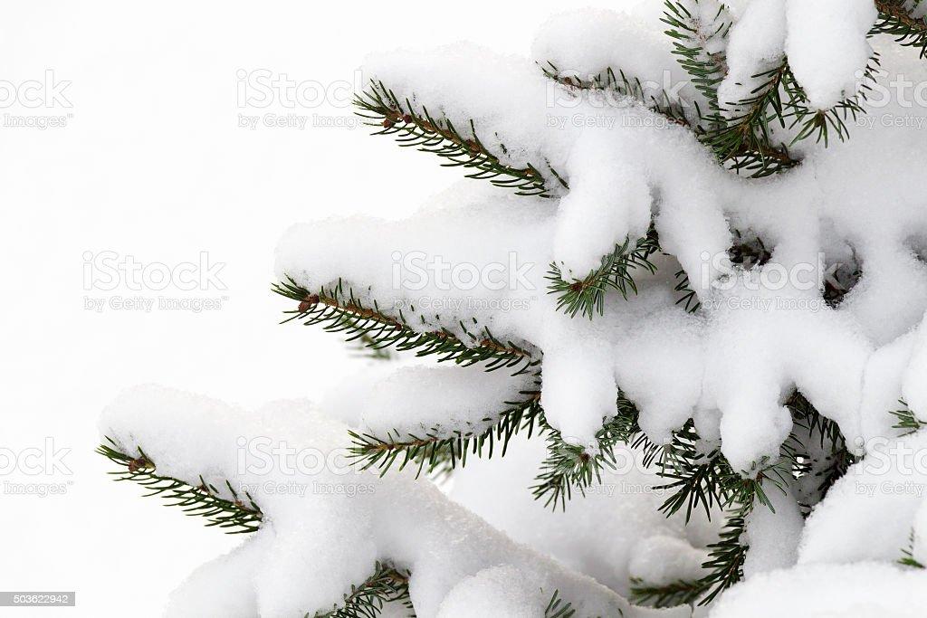 Small decorative tree in the snow stock photo